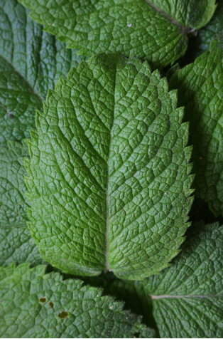 beneficios menta