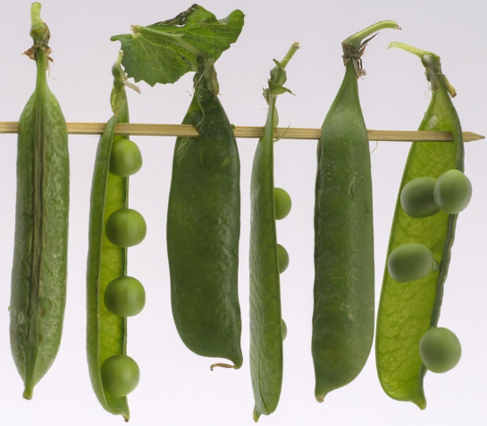 beneficios guisantes