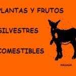 Manual: Plantas y frutos silvestres comestibles