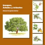 MANUAL: BOSQUES, ÁRBOLES Y ARBUSTOS