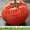 monsanto patente tomate