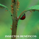insectos beneficiosos
