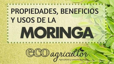 Vídeo Moringa ECO agricultor