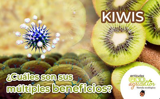 beneficios kiwis