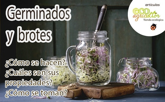 germinados beneficios